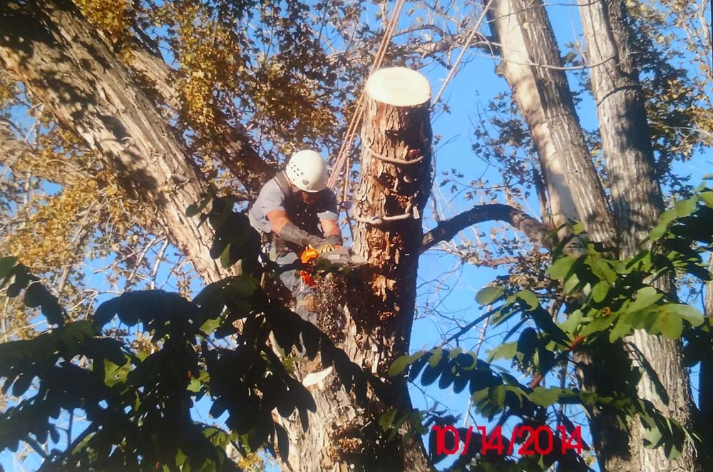 man with chainsaw cutting up a tree trunk