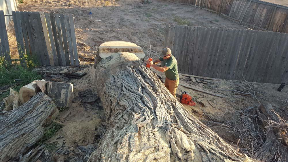 a man preparing a tree trunk to be cut