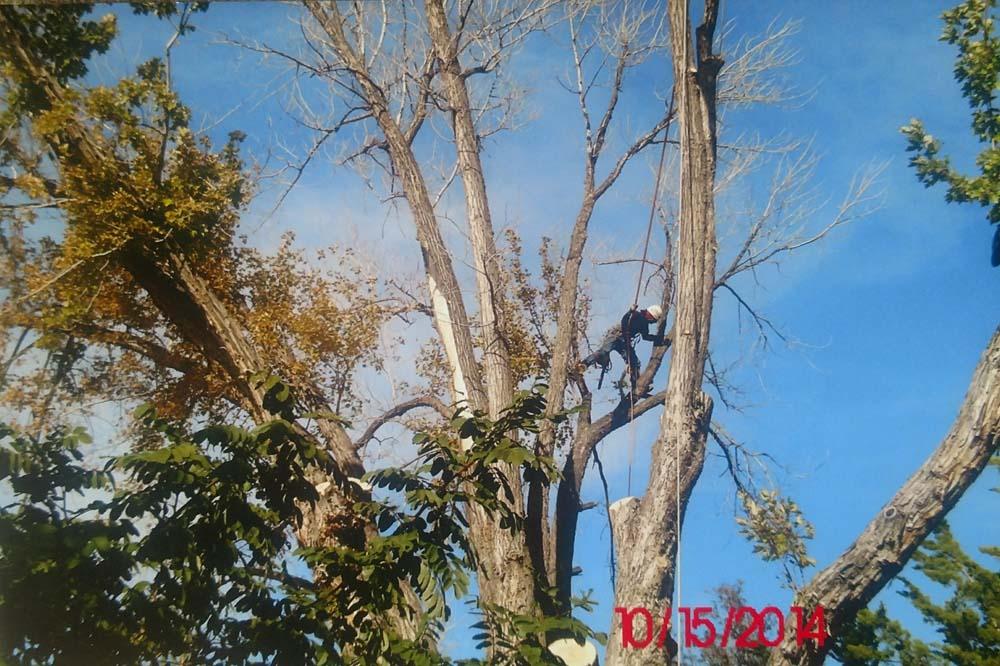 man cutting up tree trunk in tree