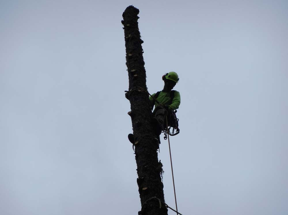 man at the top of a tree trunk