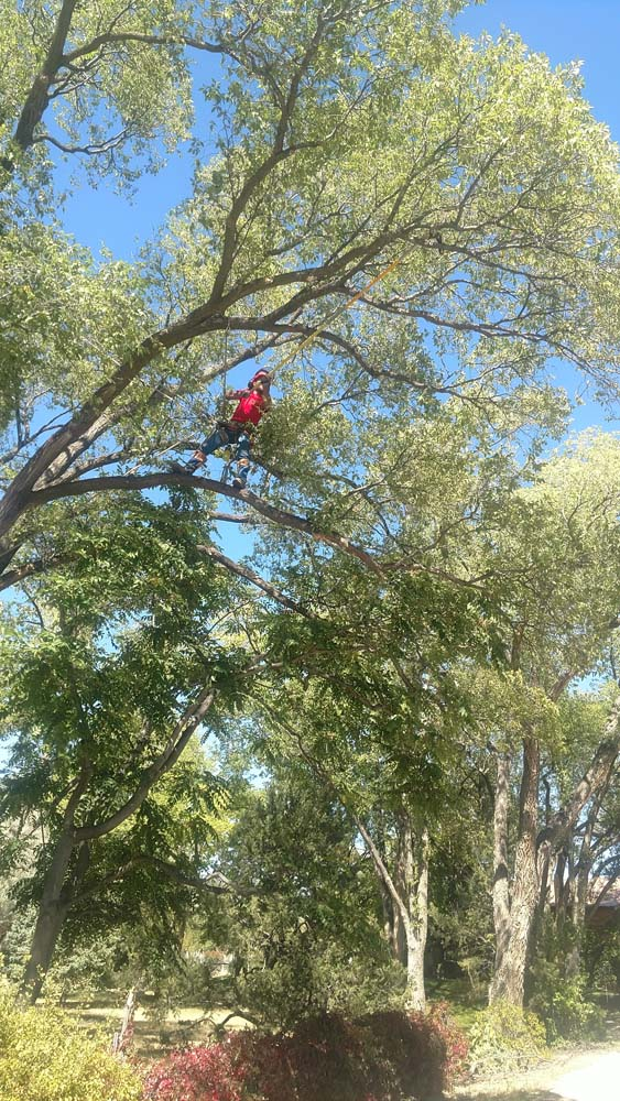 a man in a tree