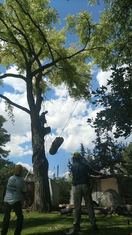 man after cutting tree branch with chainsaw