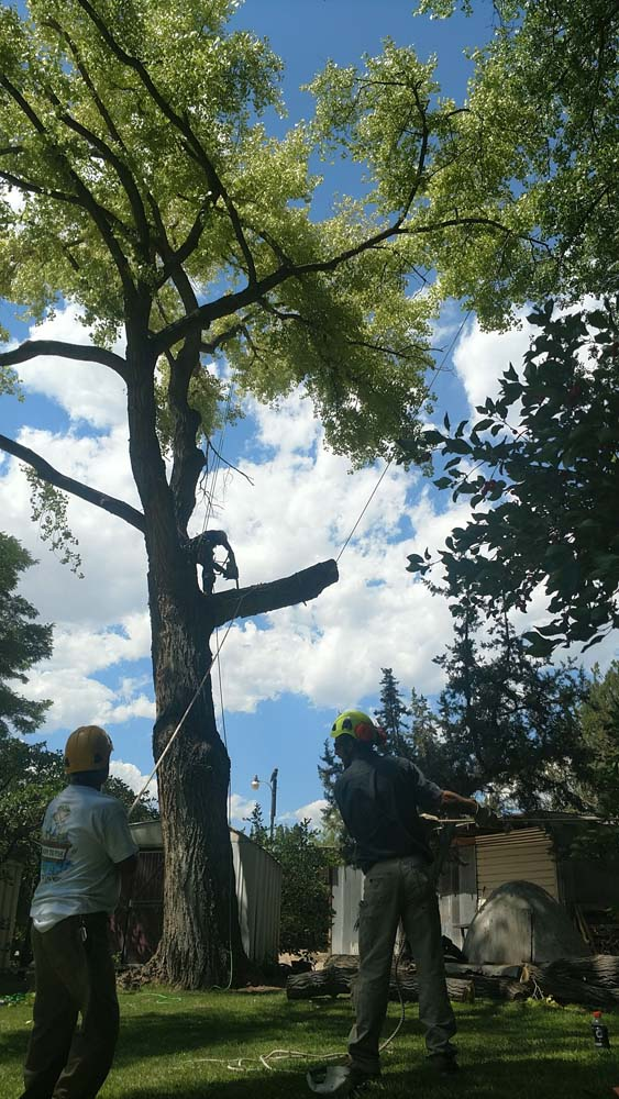 men in tree with a chainsaw