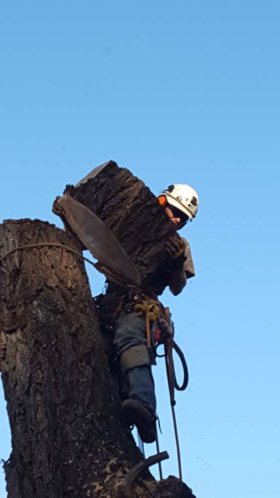 man in a tree holding a piece of the tree's trunk