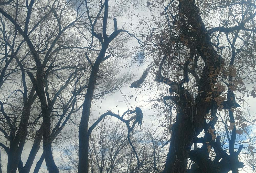 A Man Standing In A Tree & Branches Surrounding