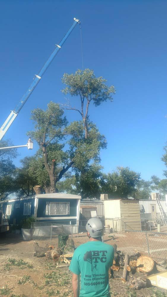 Crane Hoisting Up A Tree