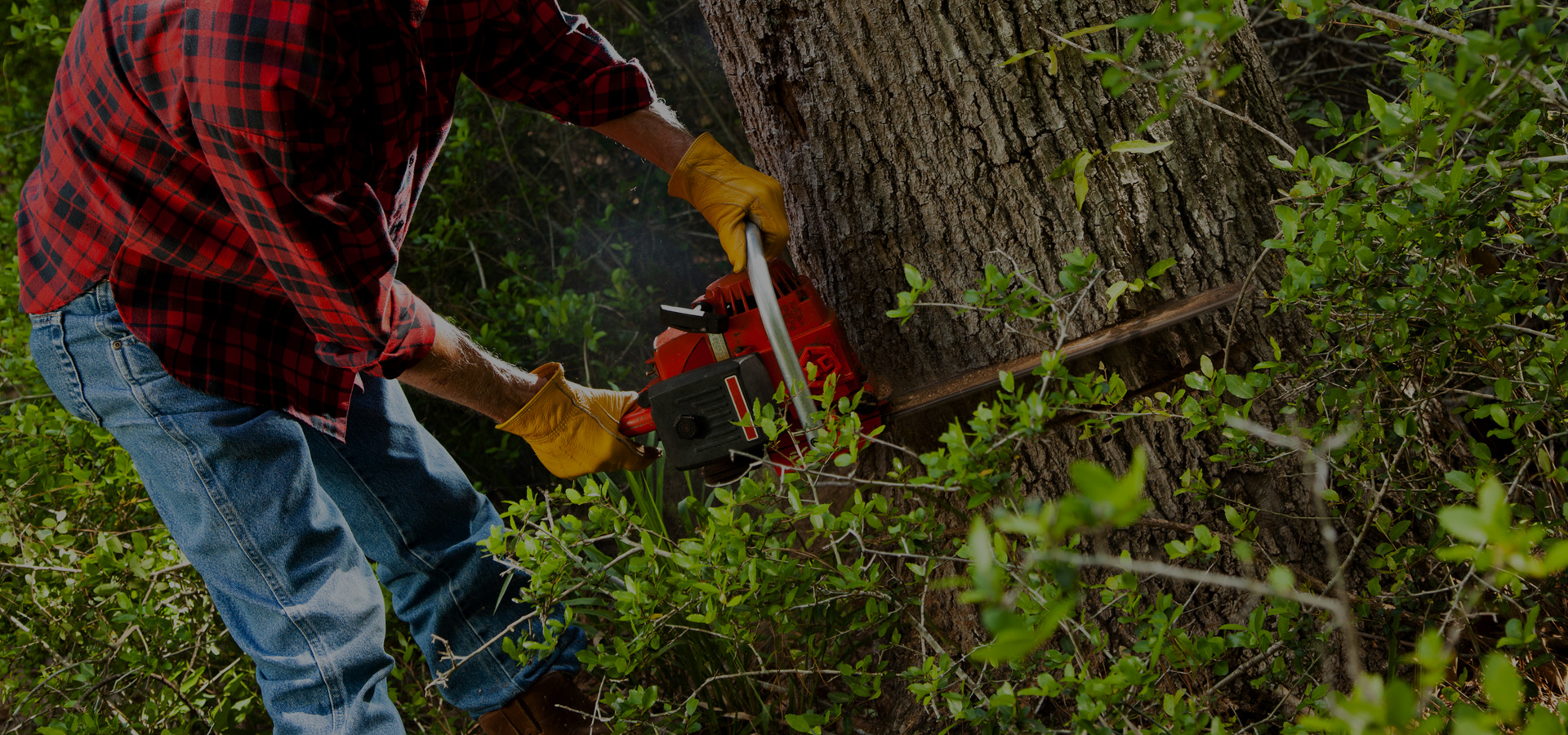 man with chainsaw cutting tree