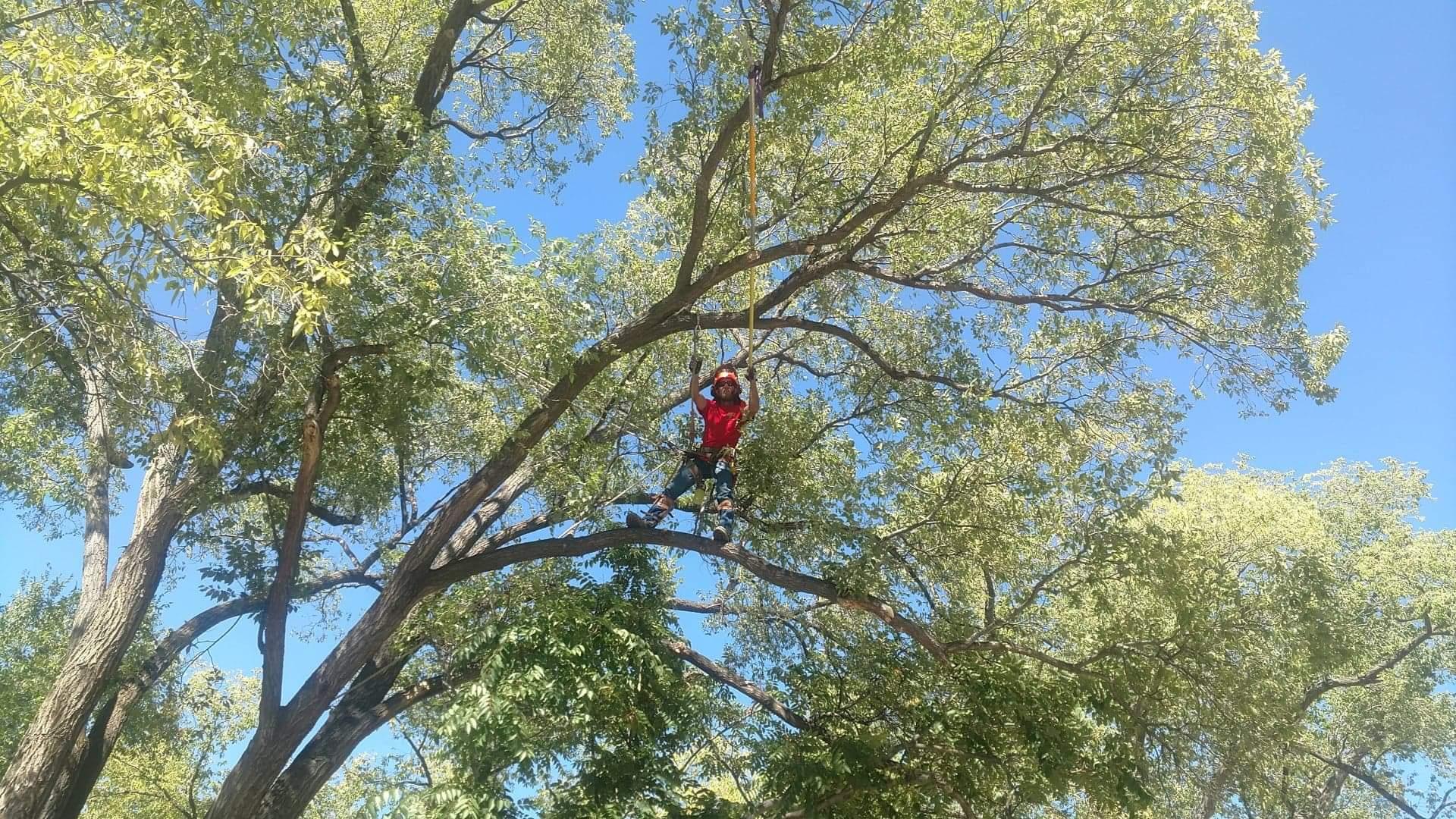 Man Hoisted Into A Tree