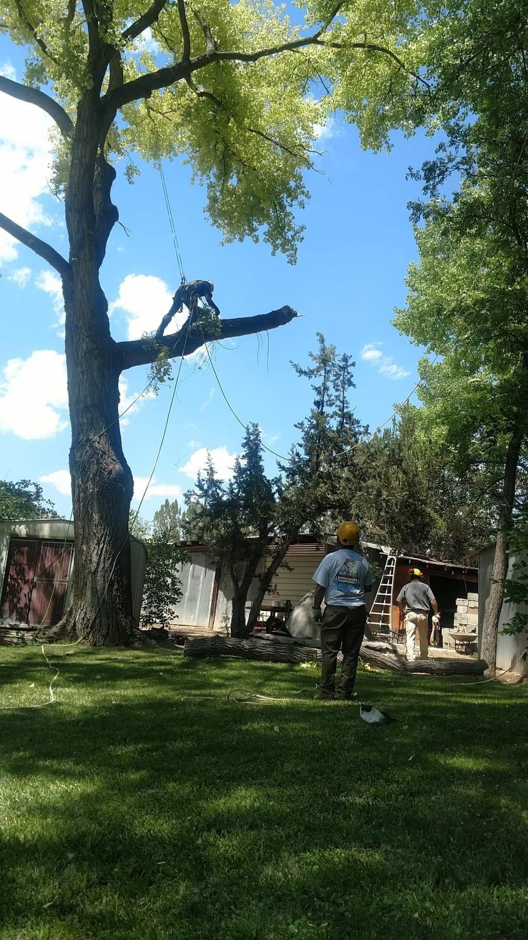 Men Cutting Down Tree Branch