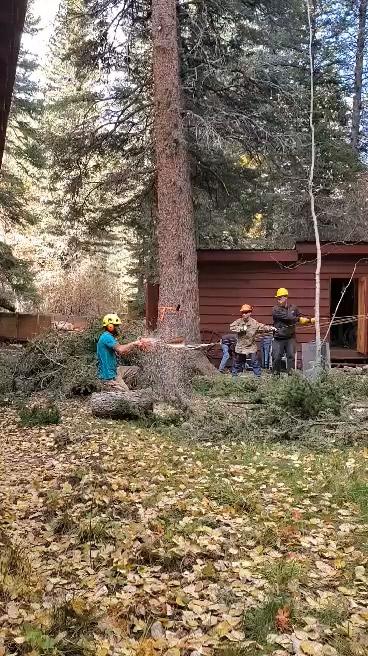 Men Cutting Down Tree