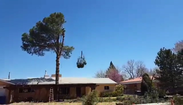 Tree Branch Being Hoisted Away From Tree